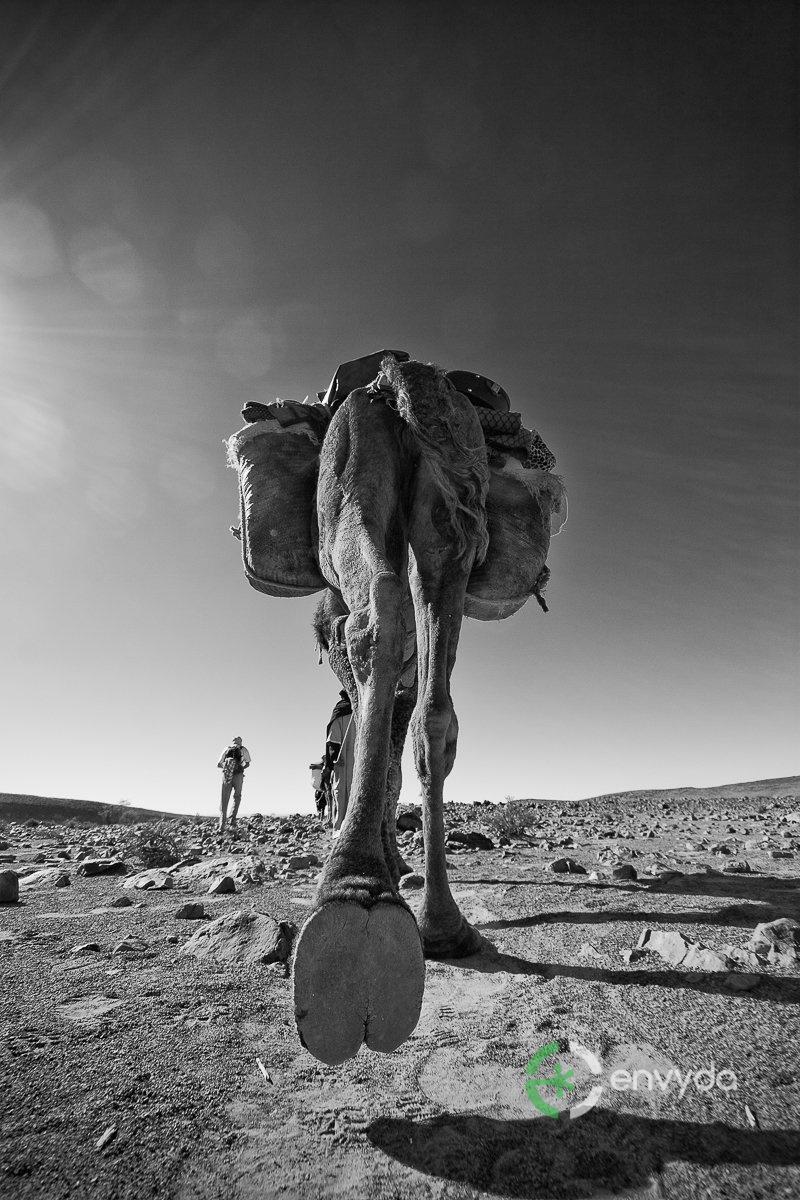 L'unica Pianta del Deserto